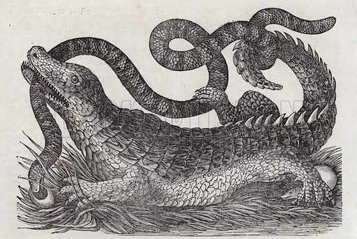 Alligator.  Illustration for The Saturday Magazine, 19 January 1832.