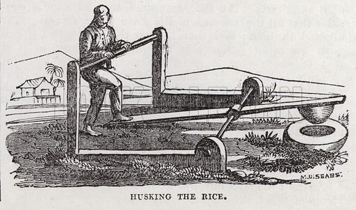 Rice production.  Illustration for The Saturday Magazine, 24 August 1833.