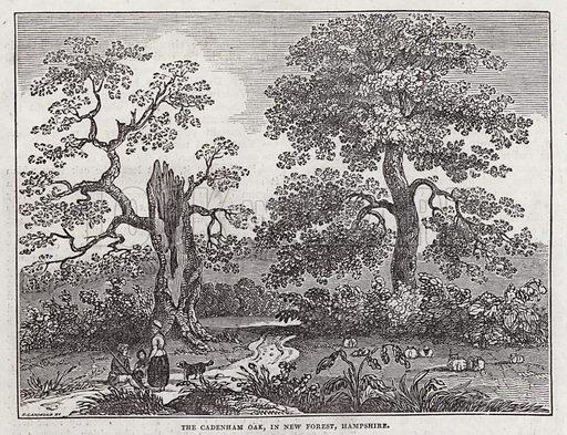 The Cadenham Oak, New Forest, Hampshire. Illustration for The Saturday Magazine, 21 December 1833.