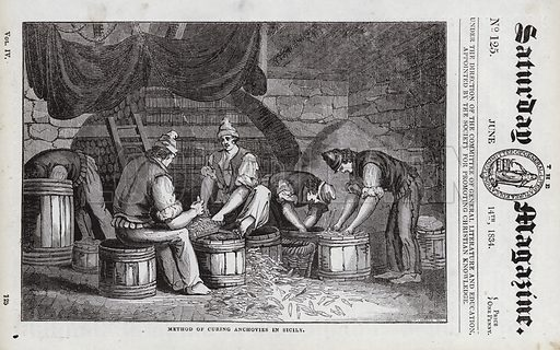 Method of curing anchovies in Sicily, Italy. Illustration for The Saturday Magazine, 14 June 1834.