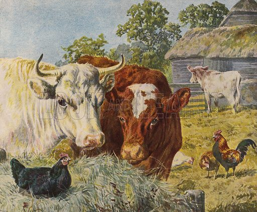 Cattle and chickens. Illustration from The Children's Farm, by L L Weedon (Nister & Co, Germany, c1900).