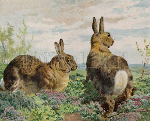 Rabbits. Illustration from The Children's Farm, by L L Weedon (Nister & Co, Germany, c1900).