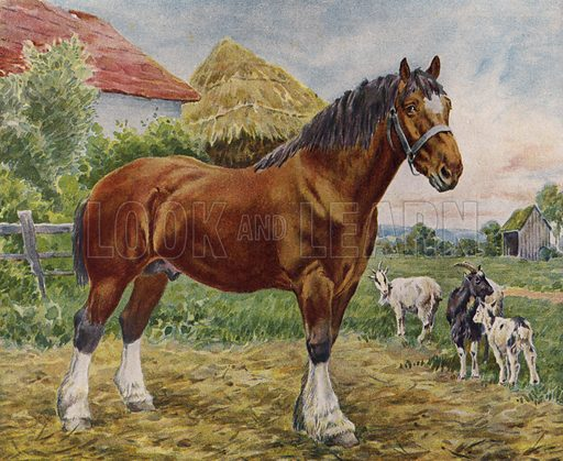Horse and goats. Illustration from The Children's Farm, by L L Weedon (Nister & Co, Germany, c1900).