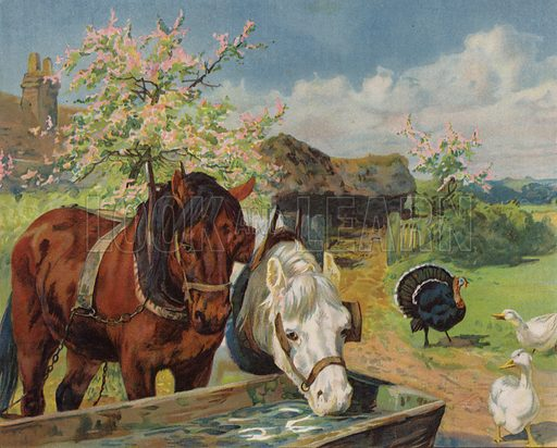 Horses drinking from a water trough. Illustration from The Children's Farm, by L L Weedon (Nister & Co, Germany, c1900).
