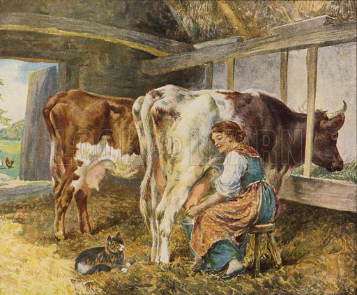 Milkmaid milking cows in a barn, watched by a cat. Illustration from The Children's Farm, by L L Weedon (Nister & Co, Germany, c1900).