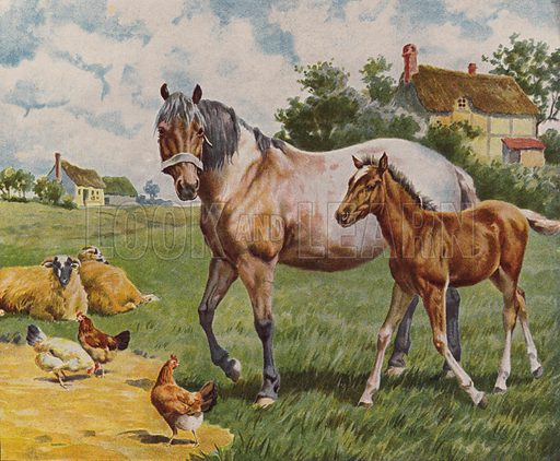 Horse and foal, sheep and hens. Illustration from The Children's Farm, by L L Weedon (Nister & Co, Germany, c1900).
