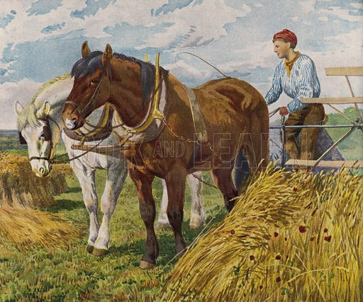 Farmer using a horse-drawn harvester. Illustration from The Children's Farm, by L L Weedon (Nister & Co, Germany, c1900).