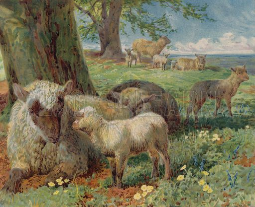 Sheep and lambs in a pasture in spring. Illustration from The Children's Farm, by L L Weedon (Nister & Co, Germany, c1900).