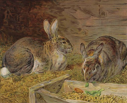 Rabbits in a barn. Illustration from The Children's Farm, by LL Weedon (Nister & Co, Germany, c1900).