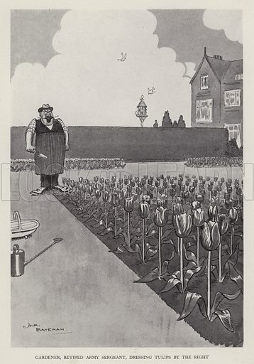 Gardener, Retired Army Sergeant, Dressing Tulips to the Right. Illustration from Brought Forward, a Further Collection of Drawings by HM Bateman (Methuen, London, 1931).