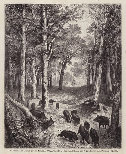 Wild boar on the Lorenzer Berg in the Imperial Park in Vienna, Austria. Illustration from Illustrierte Zeitung (Leipzig, 11 October 1879).