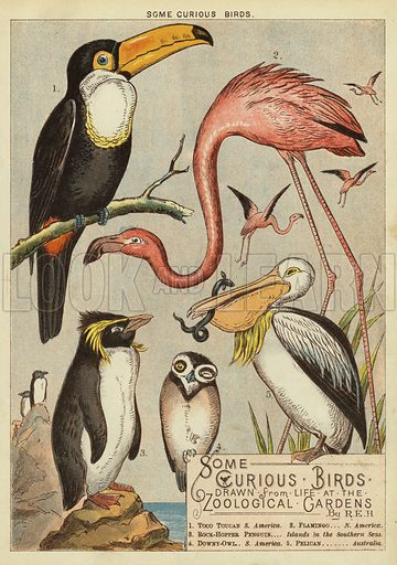 Some curious birds. Illustration from The Little One's Own Coloured Picture Paper (Dean and Son, c1890).