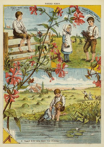 Ragged Robin. Illustration from The Little One's Own Coloured Picture Paper (Dean and Son, c1890).