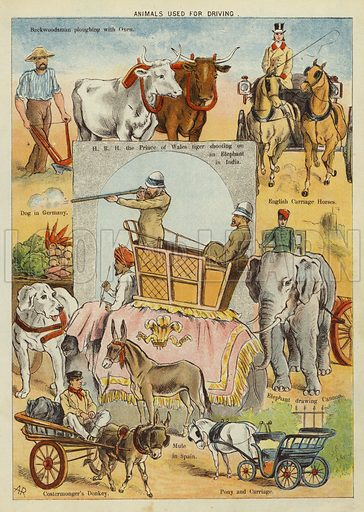 Animals used for driving. Illustration from The Little One's Own Coloured Picture Paper (Dean and Son, c1890).