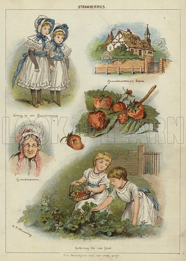 Strawberries. Illustration from The Little One's Own Coloured Picture Paper (Dean and Son, c1890).