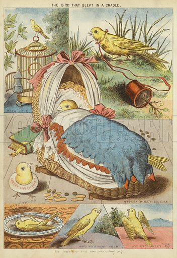 The bird that slept in a cradle. Illustration from The Little One's Own Coloured Picture Paper (Dean and Son, c1890).