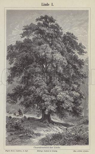 Linden tree. Illustration from Meyer's Konversations-Lexicon, c1895.