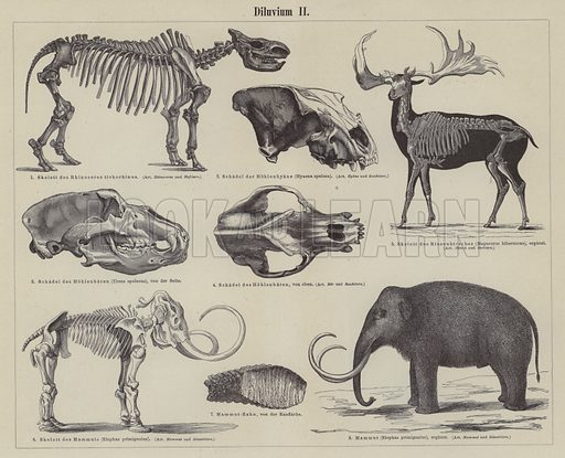 Prehistoric animals. Illustration from Meyer's Konversations-Lexicon, c1895.