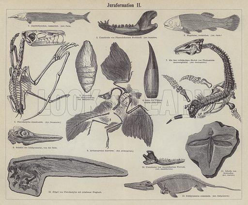 Jurassic fossils. Illustration from Meyer's Konversations-Lexicon, c1895.