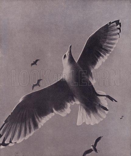 Swift and lofty-soaring, Meredith. Illustration for A Book of Praise by Harold Burdekin (J M Dent, 1948).