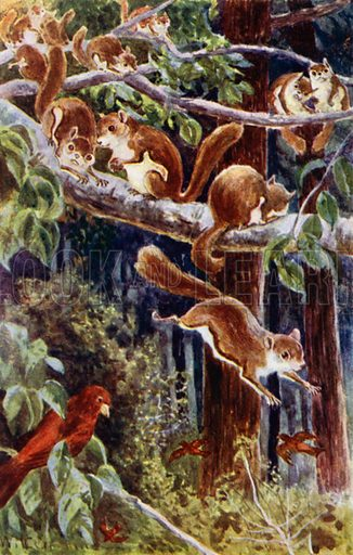 """How delightful it was to watch them frolicking about!"" Illustration for Afar In The Forest by W H G Kingston (Thomas Nelson, c 1910)."