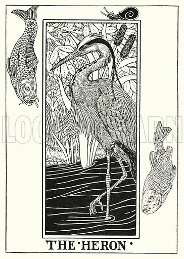 The heron. Illustration for A Hundred Fables of La Fontaine (John Lane, The Bodley Head, 3rd edn, c 1910).