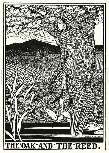 The oak and the reed. Illustration for A Hundred Fables of La Fontaine (John Lane, The Bodley Head, 3rd edn, c 1910).