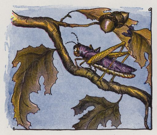 The Owl and the Grasshopper. Illustration for The Aesop for Children with pictures by Milo Winter (Rand McNally, 1919).