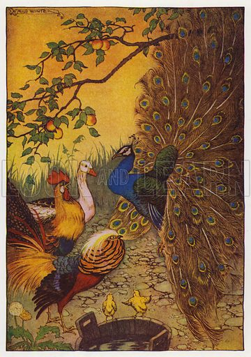 The Peacock. Illustration for The Aesop for Children with pictures by Milo Winter (Rand McNally, 1919).