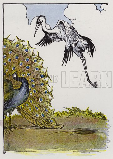 The Peacock and the Crane. Illustration for The Aesop for Children with pictures by Milo Winter (Rand McNally, 1919).