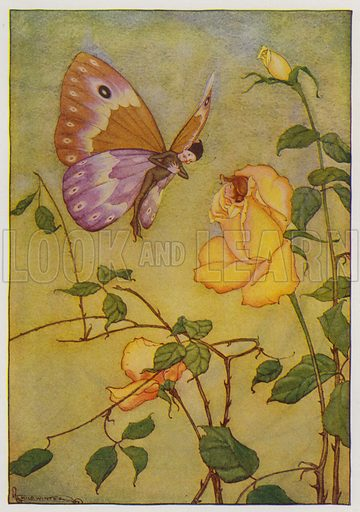 The Rose and the Butterfly. Illustration for The Aesop for Children with pictures by Milo Winter (Rand McNally, 1919).