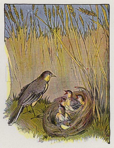 The Lark and Her Young Ones. Illustration for The Aesop for Children with pictures by Milo Winter (Rand McNally, 1919).
