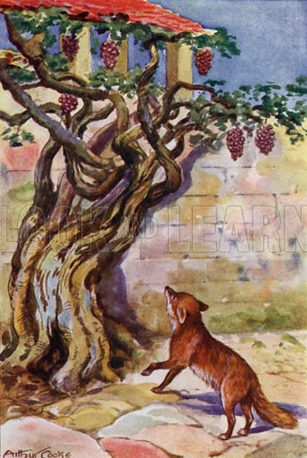 The Fox and the Grapes. Illustration for Aesop's Fables (Ward Lock, c 1917).