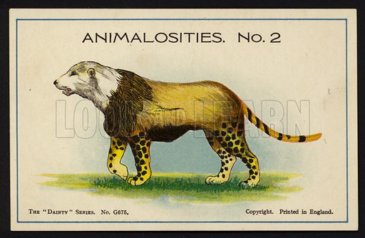 """Animalosities No 2: Polar Bear, Lion, Leopard, Tiger. One of a set of twelve Animalosities cards for game published in the """"Dainty"""" series, c 1900."""