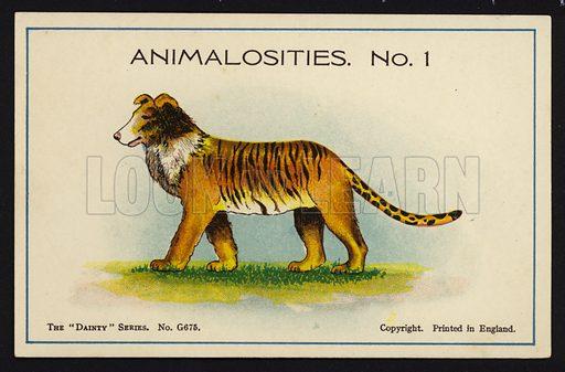 Animalosities No 1: Collie, Tiger, Lion, Leopard