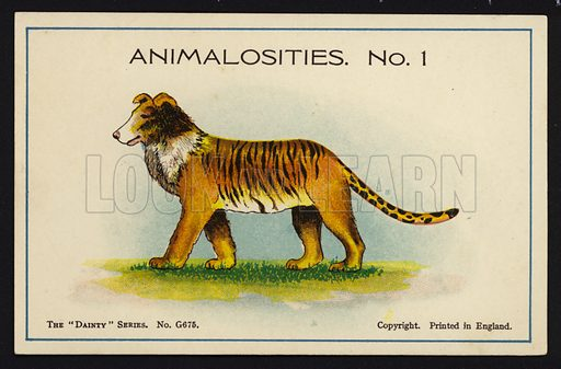 """Animalosities No 1: Collie, Tiger, Lion, Leopard. One of a set of twelve Animalosities cards for game published in the """"Dainty"""" series, c 1900."""