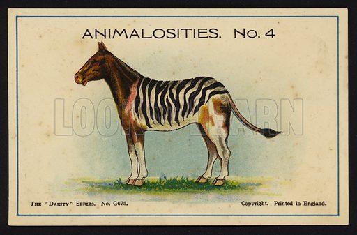 Animalosities No 4: Horse, Zebra, Cow, Lion