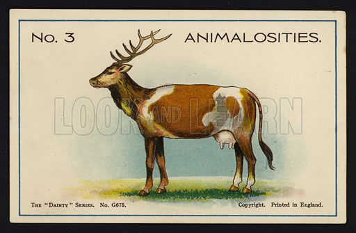 Animalosities No 3: Deer, Cow, Horse, Giraffe