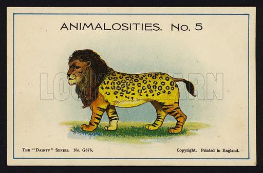 Animalosities No 5: Lion, Leopard, Tiger, Bison