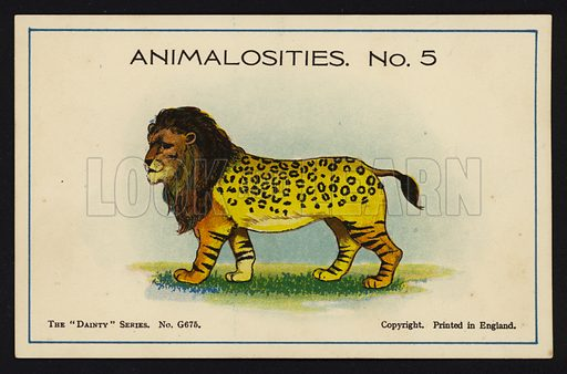 """Animalosities No 5: Lion, Leopard, Tiger, Bison. One of a set of twelve Animalosities cards for game published in the """"Dainty"""" series, c 1900."""