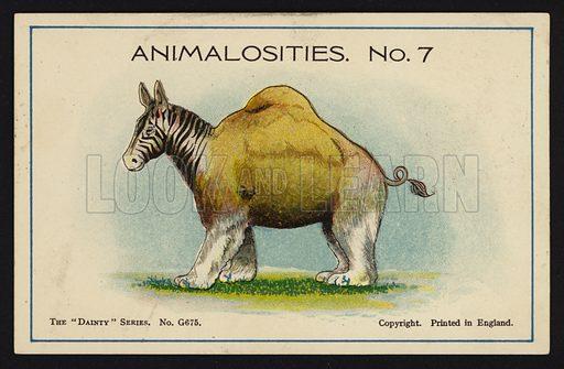 Animalosities No 7: Zebra, Camel, Polar Bear, Pig