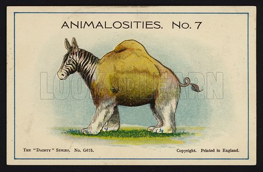 "Animalosities No 7: Zebra, Camel, Polar Bear, Pig. One of a set of twelve Animalosities cards for game published in the ""Dainty"" series, c 1900."