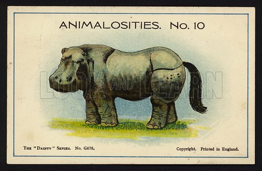 """Animalosities No 10: Hippopotamus, Rhinoceros, Elephant, Horse. One of a set of twelve Animalosities cards for game published in the """"Dainty"""" series, c 1900."""