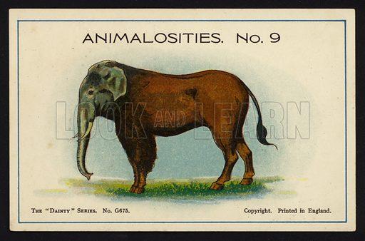 Animalosities No 9: Elephant, Horse, Bison, Zebra