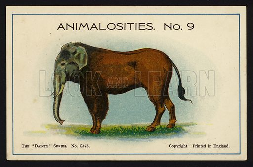 """Animalosities No 9: Elephant, Horse, Bison, Zebra. One of a set of twelve Animalosities cards for game published in the """"Dainty"""" series, c 1900."""