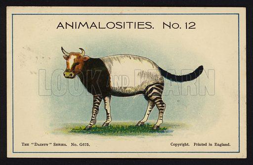 Animalosities No 12: Cow, Tapir, Zebra, Cat