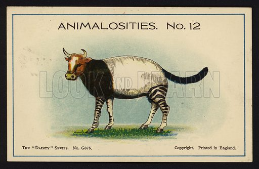 """Animalosities No 12: Cow, Tapir, Zebra, Cat. One of a set of twelve Animalosities cards for game published in the """"Dainty"""" series, c 1900."""
