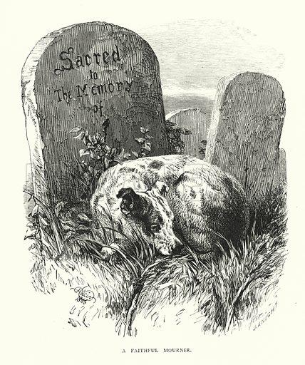 A faithful mourner. Illustration for Animal Sagacity (S W Partridge, c 1866).