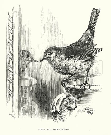 Robin and looking-glass. Illustration for Animal Sagacity (S W Partridge, c 1866).