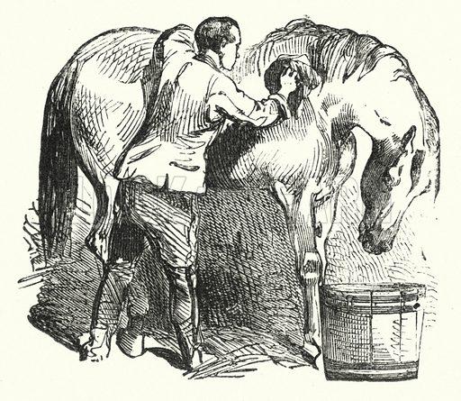 Brushing horse. Illustration for Animal Sagacity (S W Partridge, c 1866).